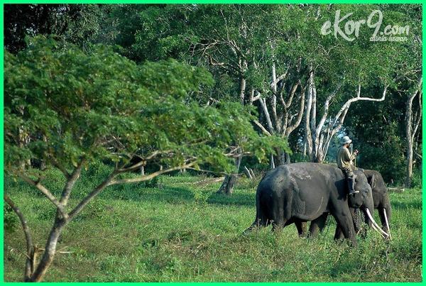 hewan langka di indonesia dan tempat perlindungannya, 10 hewan langka di indonesia dan tempat perlindungannya, 4 hewan langka yang hampir punah dan dilindungi di indonesia, hewan langka di indonesia beserta penjelasannya, hewan langka di indonesia dan populasinya, hewan dan tumbuhan langka di indonesia serta cara pelestariannya, hewan dan tumbuhan langka di indonesia serta upaya pelestariannya