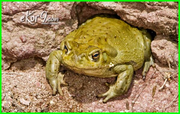 adaptasi hewan yang hidup di padang pasir, jenis hewan yang hidup di padang pasir, ciri hewan yang hidup di padang pasir, hewan yang dapat hidup di padang pasir adalah, gambar hewan yang hidup di padang pasir, hewan apa yang hidup di padang pasir, hewan yang mampu hidup di padang pasir, nama hewan yang hidup di padang pasir, bentuk adaptasi hewan yang hidup di padang pasir, cara adaptasi hewan yang hidup di padang pasir