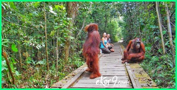 Hewan Langka Di Indonesia Cara Pelestarian Dan Suaka Margasatwanya Dunia Fauna Hewan Binatang Tumbuhan Dunia Fauna Hewan Binatang Tumbuhan