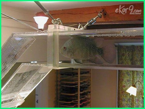 aksesoris akuarium ikan hias