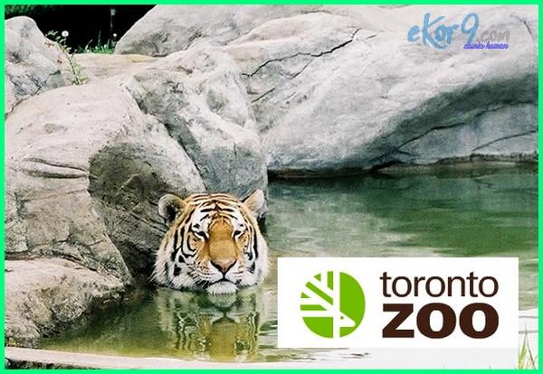 kebun binatang terbesar dunia, kebun binatang terbesar di dunia, kebun binatang terbesar dan terlengkap di dunia