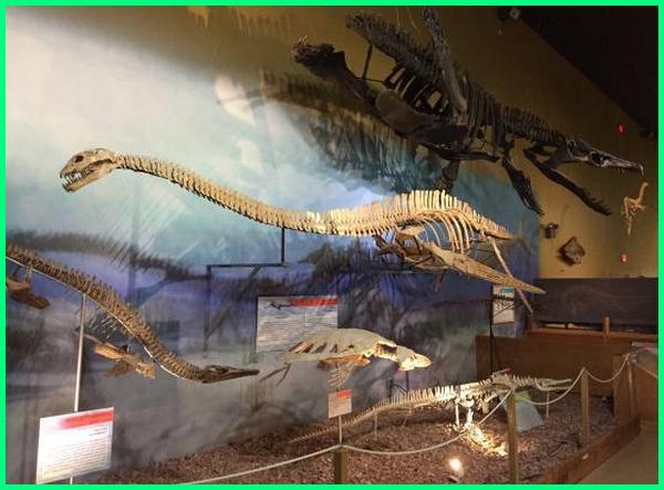 museum dinosaurus terlengkap, museum dinosaurus di dunia, fosil dinosaurus di museum geologi
