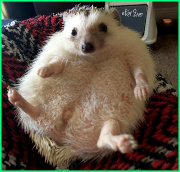 foto hewan hamil