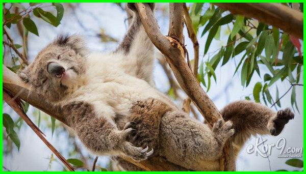 hewan yang hidup di pohon adalah, hewan yang hidup di pohon disebut, hewan yang hidupnya di pohon, hewan yang hidup diatas pohon, nama hewan yang hidup di pohon, hewan yg hidup diatas pohon, hewan yang hidup diatas pohon disebut