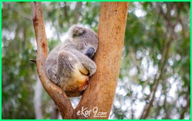 hewan tidur lama disebut binatang paling yang suka waktu dengan mamalia memiliki adalah yg tidurnya