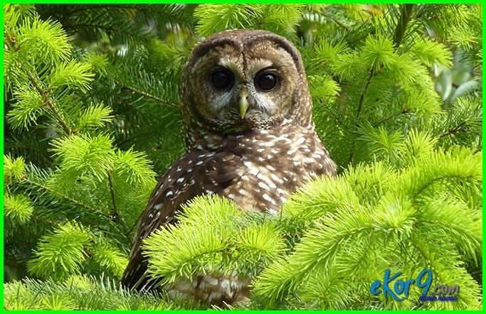 sebutkan hewan yg hidup di pohon, sebutkan 10 hewan yang hidup di pohon, 10 hewan yang hidup di pohon, 10 hewan yg hidup di pohon, 3 hewan yang hidup di pohon, 5 hewan yang hidup di pohon