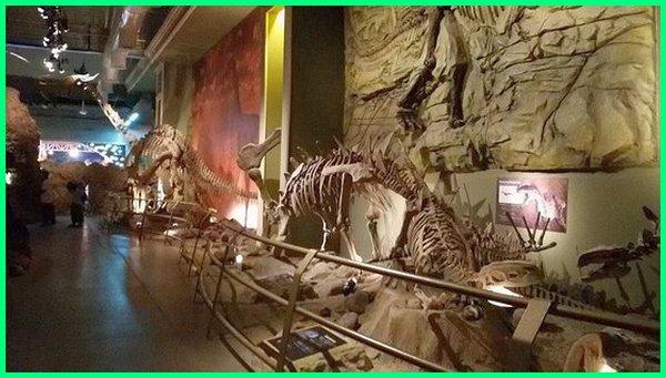museum dinosaurus