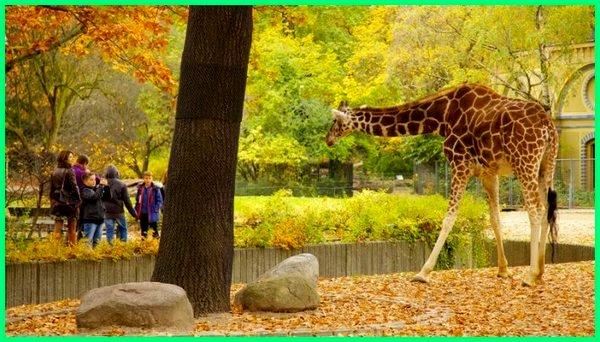 5-7 kebun binatang terbesar di dunia