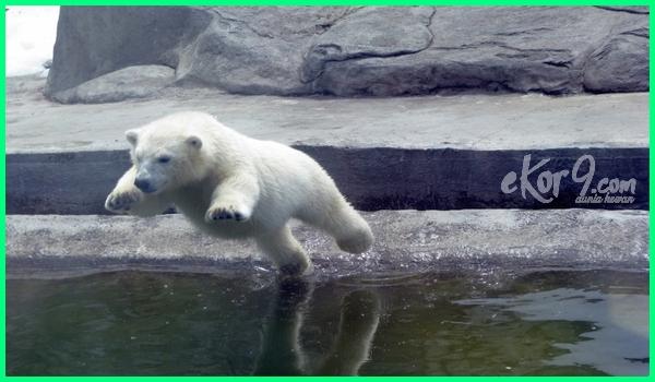 kebun binatamg di rusia, kebun binatang di seluruh dunia terbaik terbesar