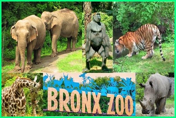 10 kebun binatang terbesar di dunia, 7 kebun binatang terbesar di dunia, 5 kebun binatang terbesar di dunia