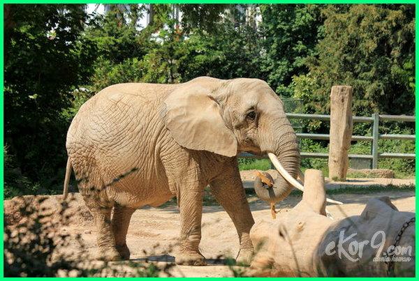kebun binatang berbahaya di dunia, kebun binatang paling berbahaya di dunia, kebun binatang paling bagus di dunia, kebun binatang terbesar dan terlengkap di dunia, daftar kebun binatang terbesar di dunia