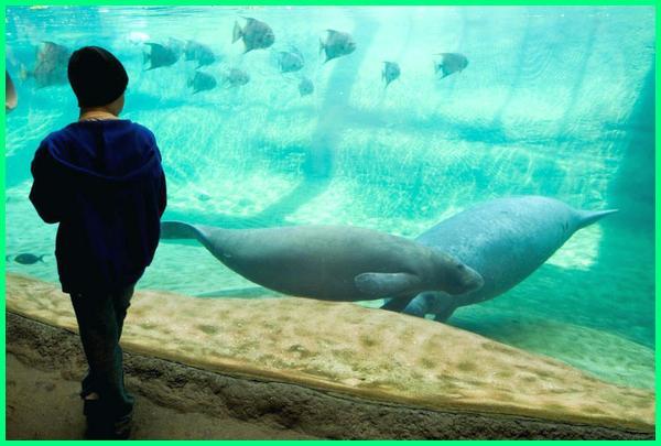 kebun binatang paling bagus di dunia