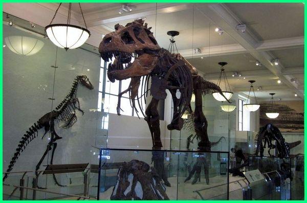 museum dinosaurus di dunia