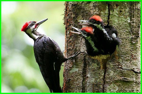 hewan yang hidup di pohon disebut, hewan yang hidupnya di pohon, hewan yang hidup diatas pohon, nama hewan yang hidup di pohon, hewan yg hidup diatas pohon, hewan yang hidup diatas pohon disebut