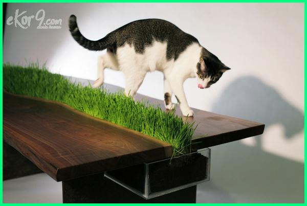 aksesoris buat kucing