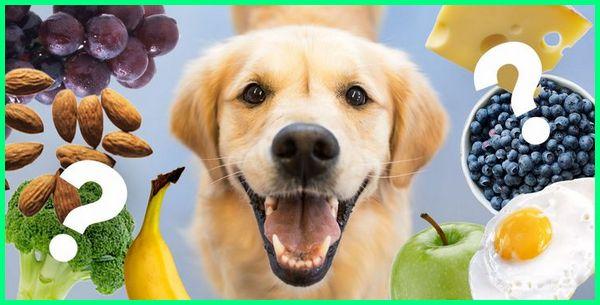 sayuran untuk anjing, sayur untuk jenis anjing, sayuran hijau bagus buat anak baik bulu yg yang boleh dimakan bisa anjing, anjing makan sayuran, sayur dan buah utk anjing, buah buahan yang bagus untuk anjing, baik buat anjing boleh dimakan tidak