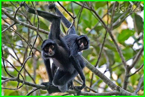 jenis hewan yg hidup di pohon, binatang yang hidup di pohon kelapa, macam macam hewan yang hidup di pohon, nama hewan yg hidup di pohon, binatang yang hidup di ranting pohon, binatang yg hidup di ranting pohon, sebutkan hewan yang hidup di pohon