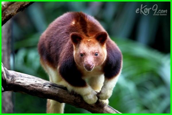 macam macam hewan yang hidup di pohon, nama hewan yg hidup di pohon, hewan yang hidup di pohon pisang, binatang hidup di ranting pohon, hewan yg hidup di ranting pohon, hewan yang hidup di ranting pohon, binatang yang hidup di ranting pohon