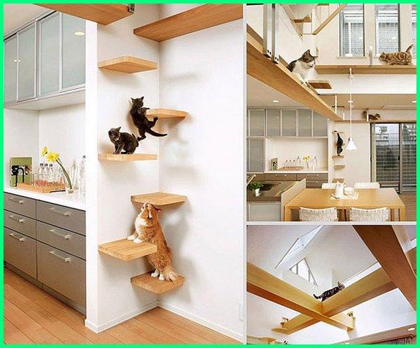 tempat bermain dengan kucing, tempat bermain bersama kucing