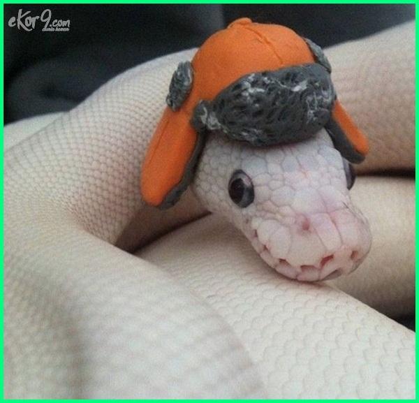 foto ular lucu