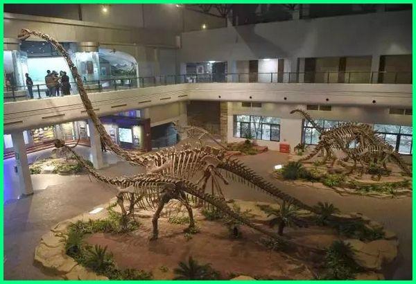 dinosaur museum zigong, dinosaur museum zigong sichuan, dinosaur museum in zigong
