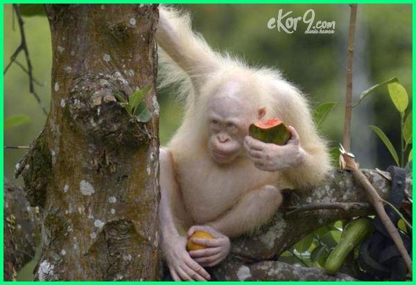 hewan albino di dunia, hewan albino terlangka di dunia, hewan albino paling langka, aneka hewan albino, kenapa hewan bisa albino, daftar hewan albino, foto hewan albino, hewan hewan albino yang mempesona
