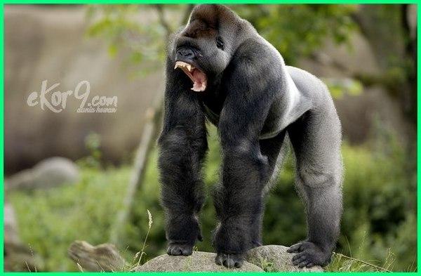 binatang paling kuat di dunia, binatang yang paling kuat di dunia, binatang yg paling kuat di dunia, binatang terkuat di dunia