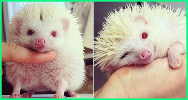 foto hewan albino, gambar hewan albino