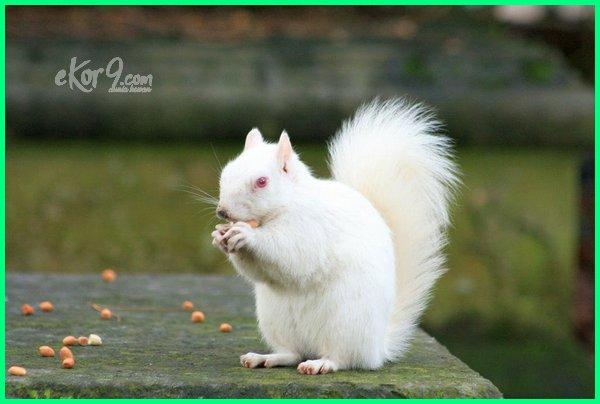 10 hewan albino terlangka di dunia, hewan yang mengidap albino, albino pada hewan, pengertian hewan albino, hewan unik albino 10 hewan albino, 12 hewan albino