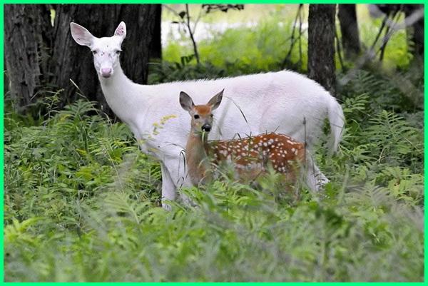 hewan albino di dunia