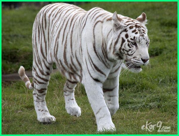 hewan albino terunik