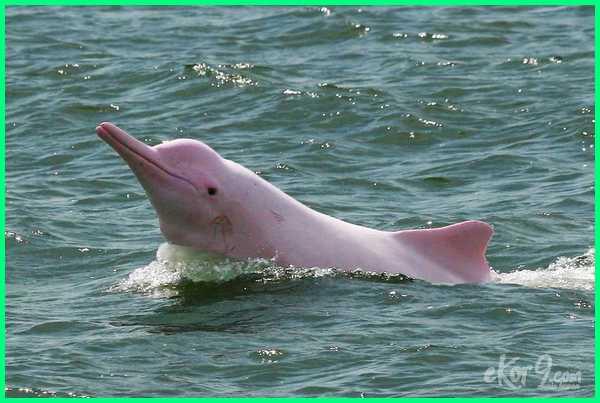 ciri hewan albino, contoh hewan albino, daftar hewan albino, foto hewan albino