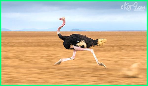 hewan tercepat dalam berlari, hewan tercepat di muka bumi, beberapa hewan tercepat, foto hewan tercepat di dunia, foto hewan tercepat, gambar hewan tercepat di dunia, gambar hewan tercepat, hewan tercepat larinya, hewan tercepat lari, hewan tercepat lari di dunia