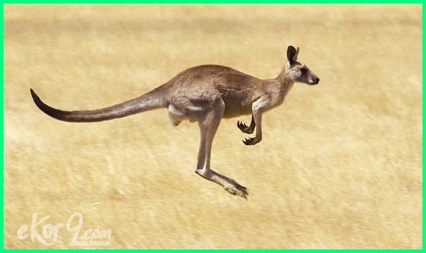 10 hewan lari tercepat di dunia, hewan larinya tercepat di dunia, hewan tercepat di afrika, hewan tercepat di dunia adalah, hewan tercepat beserta gambar, hewan berlari tercepat di dunia, hewan tercepat di bumi, hewan udara tercepat, urutan hewan tercepat di darat
