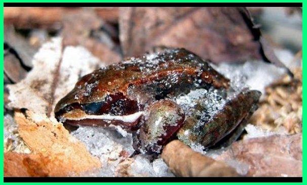 hewan yang sering hibernasi, tujuan hewan hibernasi, hewan berhibernasi untuk, hewan yang berhibernasi di musim dingin, hewan yg hibernasi, hewan yg berhibernasi, contoh hewan yang hibernasi, hewan apa yang hibernasi, 3 hewan yang melakukan hibernasi