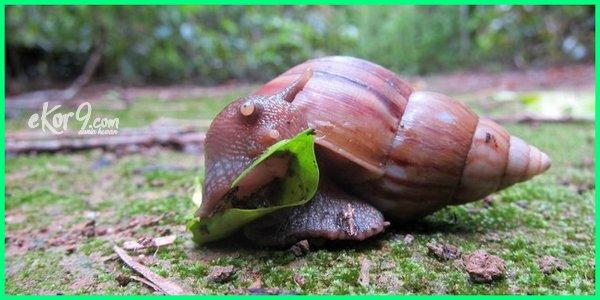 contoh hewan hibernasi dan estivasi