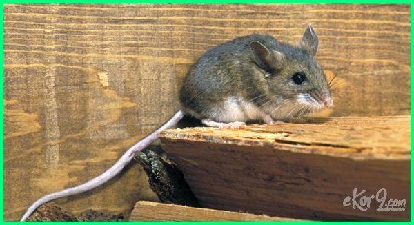 foto hewan hibernasi, gambar hewan hibernasi, hewan-hewan hibernasi, jenis hewan hibernasi