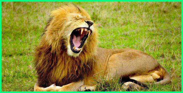 gigitan binatang terkuat di dunia, binatang dengan gigitan terkuat, definisi gigitan binatang, binatang dengan gigitan paling kuat, jenis gigitan binatang, lp gigitan binatang, gigitan hewan mematikan, makalah gigitan binatang berbisa pdf, gigitan binatang ppt, gigitan binatang pdf
