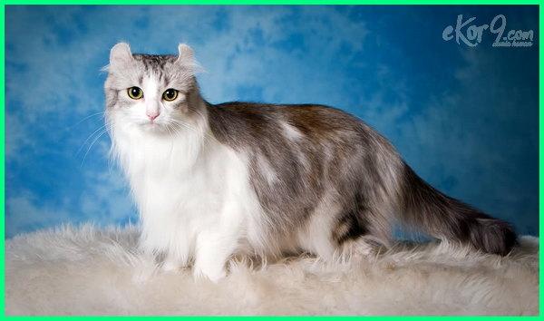 17 Gambar Jenis Kucing Yang Paling Cantik Di Dunia Dunia Fauna Hewan Binatang Tumbuhan Dunia Fauna Hewan Binatang Tumbuhan