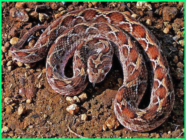ular yang paling berbisa di dunia, ular yg paling berbisa di dunia, urutan ular paling berbisa di dunia, urutan ular paling beracun di dunia, ular yang paling beracun di dunia, ular yg paling beracun di dunia, 3 ular paling berbisa di dunia, 5 ular paling berbisa di dunia, 5 ular berbisa paling mematikan di dunia, 7 ular paling beracun di dunia, 7 ular paling berbisa di dunia, 7 ular berbisa paling mematikan di dunia