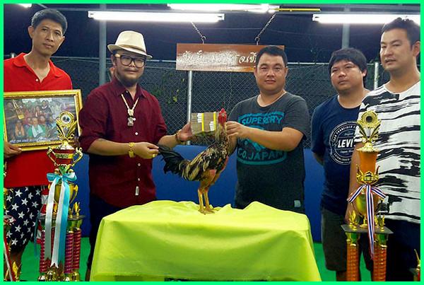 ayam bangkok termahal di dunia dan indonesia