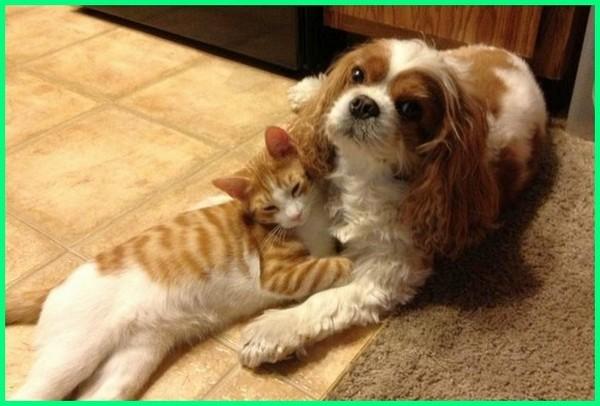 anjing atau kucing, anjing sama kucing, anjing dan kucing