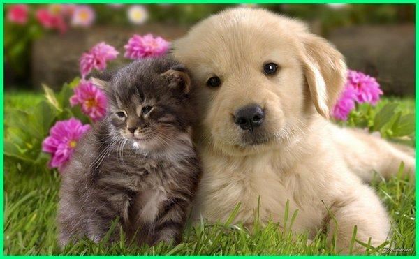 anjing dan kucing yang lucu, anjing yang bisa berteman bersahabat dengan kucing