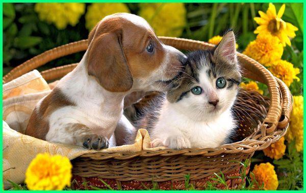anjing main dengan kucing