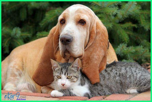 anjing bersahabat dengan kucing