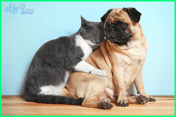 foto anjing tak kawin dengan kucing, gambar anjing non kawin dengan kucing, anjing kucing jangan kawin, youtube anjing tidak kawin dengan kucing, tidak ada perkawinan anjing dengan kucing, anjing sama kucing dilarang kawin, anjing vs kucing