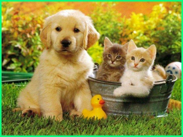anjing dan kucing bisa akur