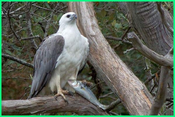 burung yang bagus di Australia