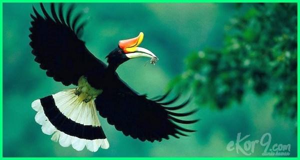 jenis burung langka indonesia