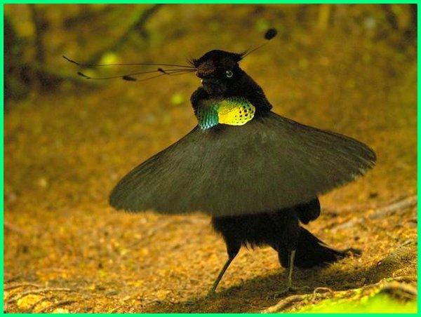 burung unik papua